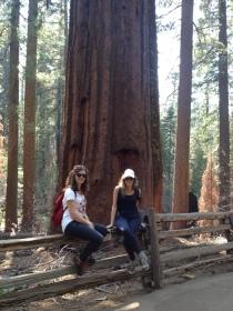 """YOSEMITE NATIONAL PARK, California, USA #2015. """"Fate come gli alberi: cambiate le foglie ma conservate le radici. Quindi, cambiate le vostre idee ma conservate i vostri principi""""."""
